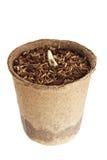 De jonge plant groeit van een vruchtbare grond bent geïsoleerd Royalty-vrije Stock Foto