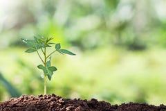De jonge plant van de zaadwortel in ochtend royalty-vrije stock afbeeldingen