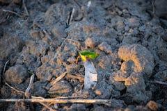 De jonge planten maakt hun manier van de grond aan het zonlicht stock afbeelding