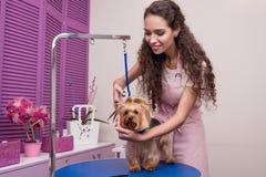 De jonge professionele schaar van de groomerholding terwijl het verzorgen van hond in huisdierensalon royalty-vrije stock foto