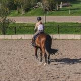 De jonge sprongen die van de vrouwenjockey op een mooi bruin paard berijden stock afbeeldingen