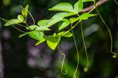 De jonge spruit van bomen in het regenachtige seizoen royalty-vrije stock afbeeldingen