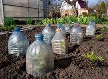 De jonge spruiten zijn behandeld die met kappen van plastic flessen worden gemaakt royalty-vrije stock foto