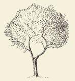 De jonge vector getrokken hand van de olijfboomillustratie royalty-vrije illustratie