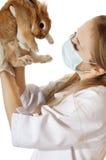 De jonge veterinaire arts onderzoekt huisdieren bruin konijn. royalty-vrije stock foto's