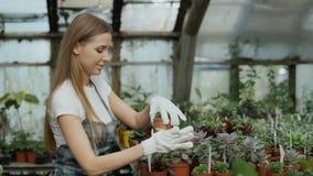 De jonge vrolijke vrouw in schort en handschoenen het tuinieren installaties en maakt grond in bloem in serre los stock footage