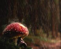 De jonge vrouw beschermt zich tegen regen onder een paddestoel royalty-vrije stock foto's