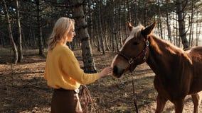 De jonge vrouw in een gele sweater koestert een ontzagwekkend bruin en wit paard in een houten langzame motie stock videobeelden