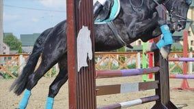 De jonge vrouw springt paard over een hindernis tijdens een gebeurtenis in een arena langzame motie stock video