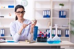 De jonge vrouwelijke archeoloog die in het laboratorium werken stock afbeeldingen