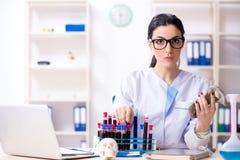 De jonge vrouwelijke archeoloog die in het laboratorium werken stock foto