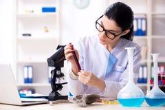 De jonge vrouwelijke archeoloog die in het laboratorium werken stock fotografie
