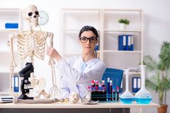 De jonge vrouwelijke archeoloog die in het laboratorium werken royalty-vrije stock fotografie
