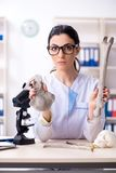 De jonge vrouwelijke archeoloog die in het laboratorium werken royalty-vrije stock afbeeldingen