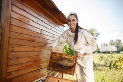 De jonge vrouwelijke imker trekt van de bijenkorf een houten kader met honingraat terug Verzamel honing Imkerijconcept royalty-vrije stock foto's