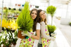De jonge vrouwen in bloem tuinieren Stock Fotografie
