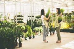 De jonge vrouwen in bloem tuinieren Stock Afbeelding