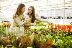 De jonge vrouwen in bloem tuinieren Stock Afbeeldingen