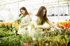 De jonge vrouwen in bloem tuinieren Royalty-vrije Stock Fotografie