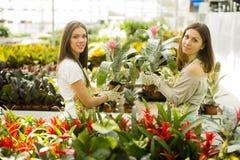 De jonge vrouwen in de bloem tuinieren Royalty-vrije Stock Afbeelding