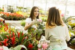 De jonge vrouwen in de bloem tuinieren Royalty-vrije Stock Afbeeldingen