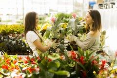 De jonge vrouwen in de bloem tuinieren Stock Foto's