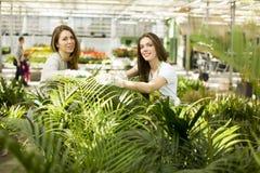 De jonge vrouwen in de bloem tuinieren Royalty-vrije Stock Foto