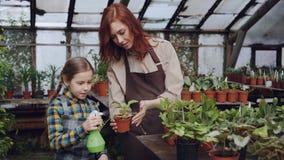 De jonge vrouwen deskundige tuinman onderwijst haar nieuwsgierige kleine dochter om bladeren van groene pot plantst met nevel te  stock video