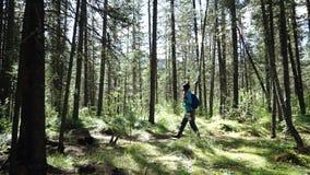 De jonge vrouwentoerist met rugzak loopt in het bos op zonnige dag Lang Schot stock videobeelden