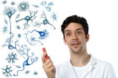 De jonge wetenschapper of de medische specialist verklaren over neuronen stock afbeelding