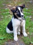 De jonge zitting van de puppyhond op gras Stock Fotografie