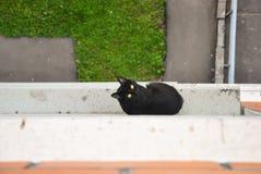 De jonge zwarte kat ontsnapte van de ruimte en de zitting buiten bij de venstervensterbank van een flatgebouw en het kijken op en Royalty-vrije Stock Fotografie