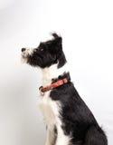De jongelui mixedbreed hond royalty-vrije stock afbeelding