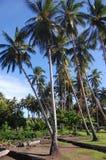 De jongen beklimt bij kokospalm Royalty-vrije Stock Afbeeldingen