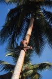 De jongen beklimt bij kokospalm Stock Foto's