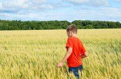 De jongen in een heldere T-shirtlooppas langs het gele gebied waar de oren van korrel, de korrel tegen de blauwe hemel, de achter stock fotografie