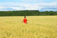 De jongen in een heldere T-shirtlooppas langs het gele gebied waar de oren van korrel, de korrel tegen de blauwe hemel, de achter royalty-vrije stock afbeelding