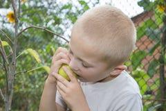 De jongen eet een peer van een boom Stock Fotografie
