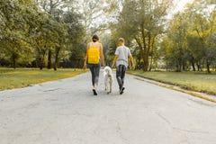 De jongen en het meisje die van kinderentieners op de weg in het park met een witte hond schor, achtermening lopen royalty-vrije stock fotografie