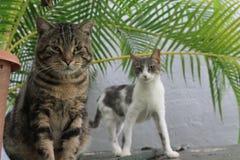 De jongen en het meisje van katten Stock Afbeelding