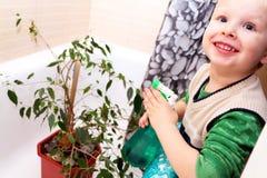 De jongen geeft voor een huisinstallatie in de badkamers Ficus Benjamina stock afbeeldingen