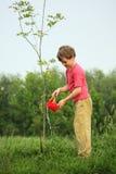 De jongen giet op zaailing van boom stock afbeelding