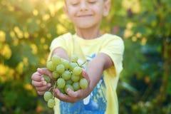 De jongen houdt de druiven stock foto's