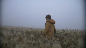 De jongen loopt op een gouden gebied bij dageraad, dauw, regenachtig weer, langzame motie stock footage