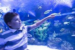 De jongen in Oceanarium overweegt vissen Stock Foto