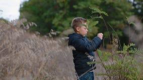 De jongen ontdekt aard stock footage
