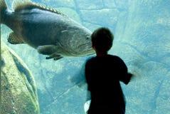 De jongen ontmoet grote vissen Stock Foto
