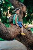 De jongen op een boom Stock Foto