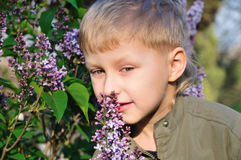De jongen ruikt een sering Stock Afbeeldingen