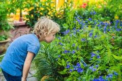 De jongen ruikt een weinig blauwe bloemen stock afbeelding